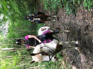 Equestrian pic 1