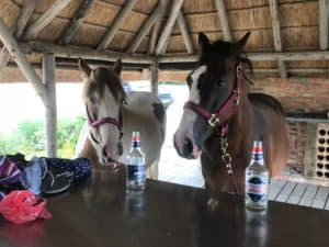 Equestrian pic 2